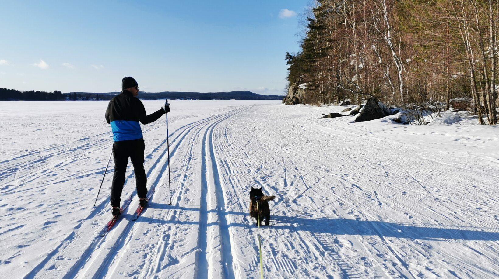 Hiihtäjä ja koira Saraveden jäällä aurinkoisena talvipäivänä.